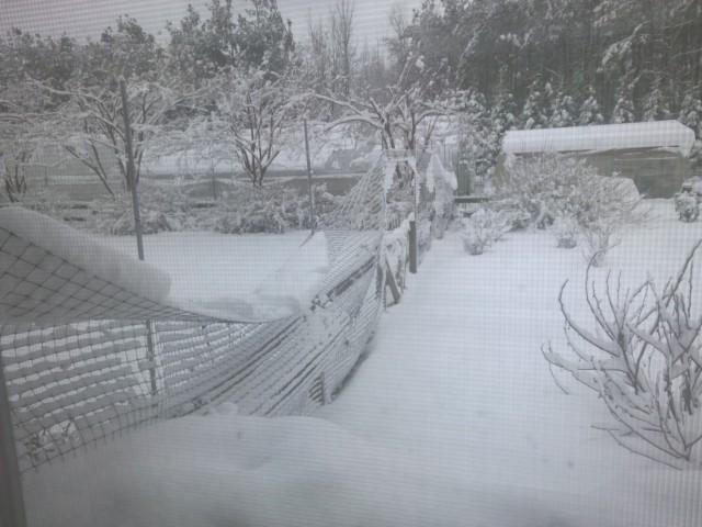 Snow Feb 26 2015